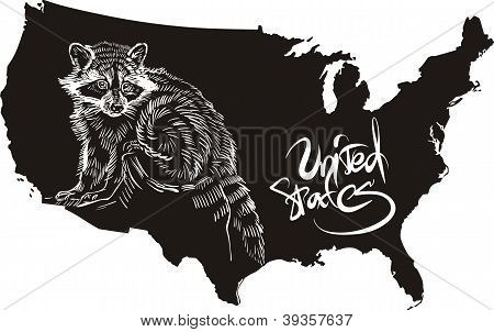 Raccoon And U.s. Outline Map