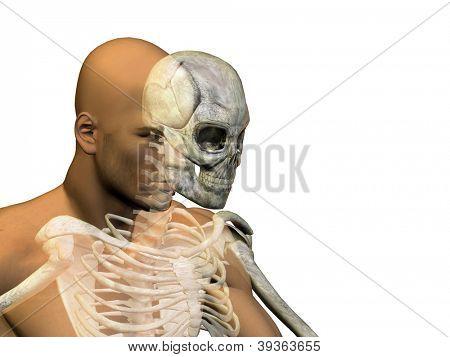 Anatomie Konzept oder konzeptionelle Mensch oder Mensch Körper Brust, Kopf isoliert auf Hintergrund als Metapher für