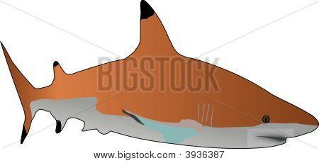 Sharkiivector.Eps