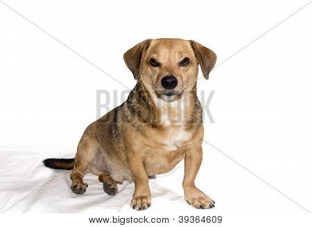 Spitefull Dog
