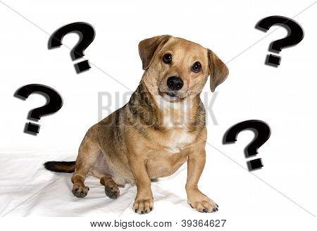 Hund verwirrt