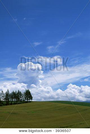 O céu azul com árvores e grama