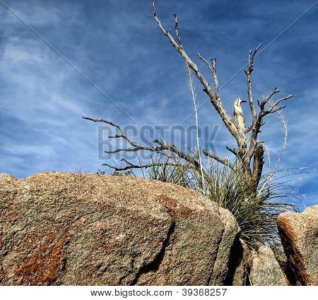Desert Deadwood