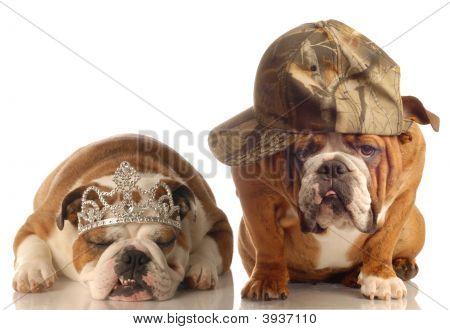 Bulldog Hunting With Princess Bulldog
