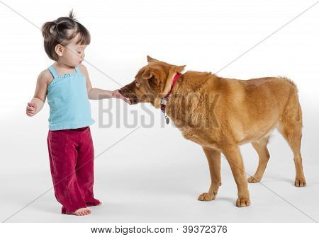 Young Girl Feeding Treat To Dog