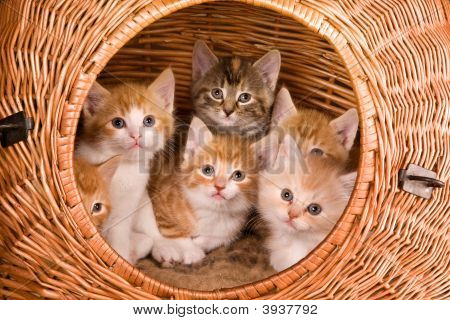 Six In A Basket