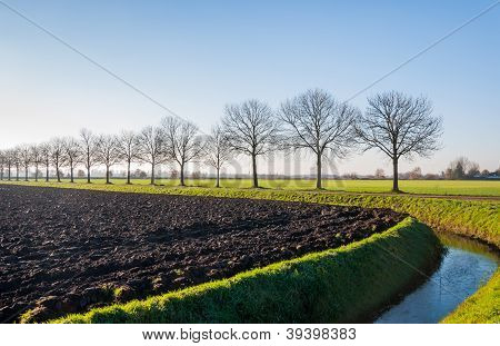 Dutch Landcape In Autumn