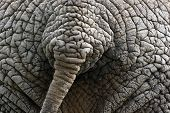 foto of rear-end  - Elephant - JPG