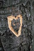 Heart On Tree Trunk