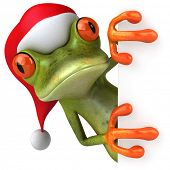 picture of amazonian frog  - Christmas frog - JPG