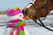 foto of horses eating  - Portrait of horse and snowman in winter landscape - JPG