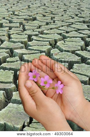 Child holding the flowers, arid region of the background