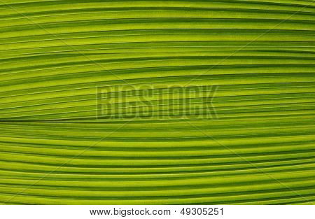 Close-up leaf texture