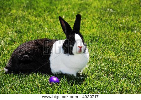 Black And White Bunny