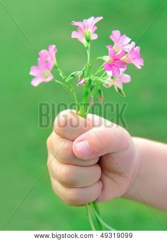 Childs hand holding out a wild flower  for you!
