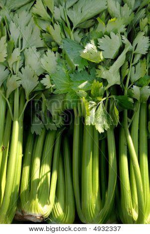 Vegetable, Celery