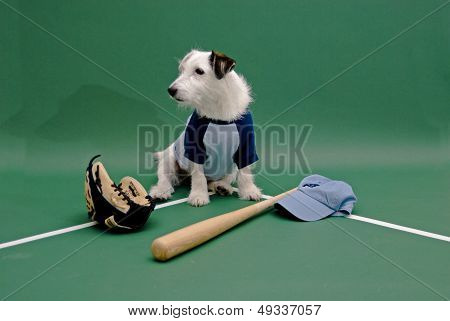 white dog playing baseball