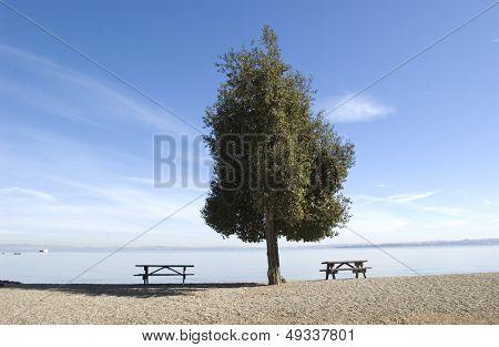 Regal tree on beach