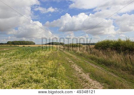 Agricultural Views