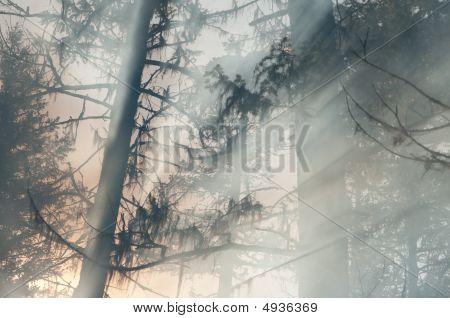 Light Beam Trees