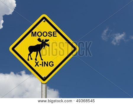 Use Caution Moose Are Present