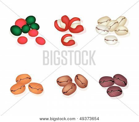 Various Kind Of Coffee Beans On White Background