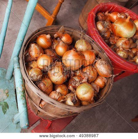 Onion Harvest In Bushel