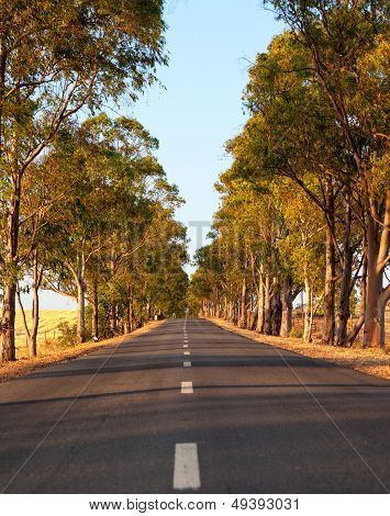 Tree-lined Tarred Road