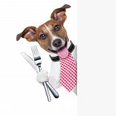 stock photo of tongue licking  - hungry dog with cutlery waiting for the meal - JPG