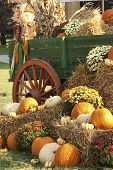stock photo of wagon wheel  - This is a old antique wagon and fall display of pumpkins, squash, hay, and mums, all in autumn colors