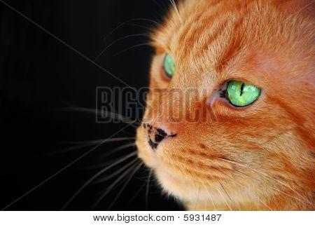 Emerald Green Eyes