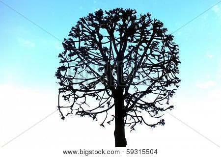 Silhouette of a round tree during winter
