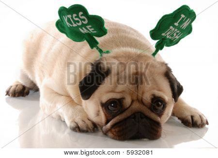Pug Kiss Me Im Irish