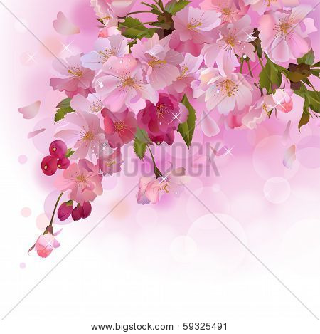 Pink card with cherry branch of flowers
