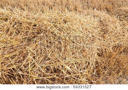 Straw On The Stubblefield