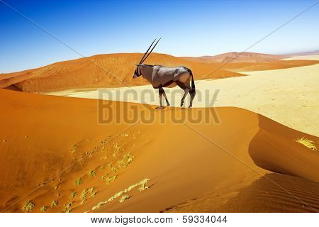 Sossusvlei Dunes Oryx