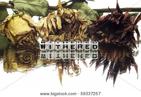 Withered