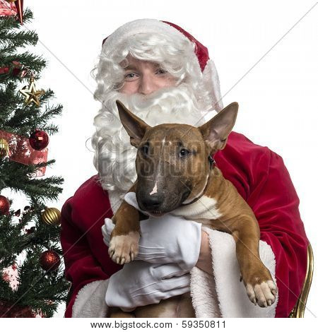 Close-up of Santa Claus holding a Bull terrier, isolated on white