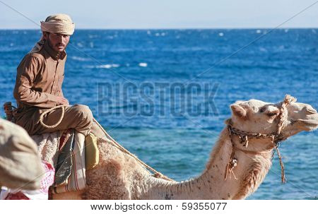 DAHAB, EGYPT - JANUARY 30, 2011: Bedouin man rides  a camel on beach during safari. Local bedouins rely on tourism to make a living in the harsh desert.