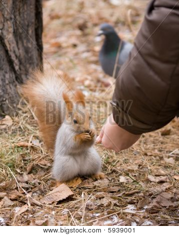 Feeding Squirrel