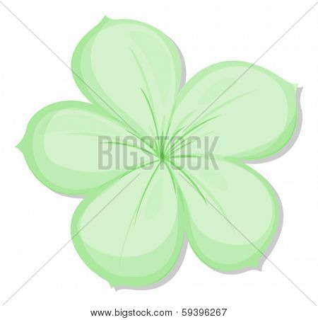 Illustration of a five-petal green flower on a white background