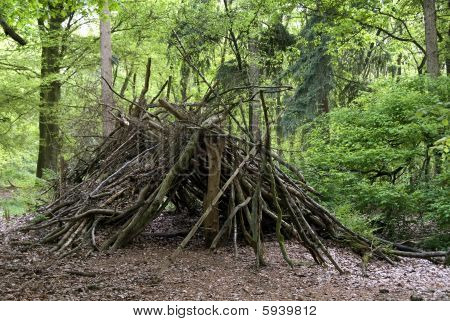 Primitive Shed In The Wood