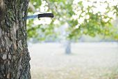 Hunting knife stuck into tree