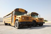 stock photo of qatar  - Two yellow school buses in a parking lot - JPG