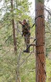 stock photo of bow arrow  - Bow hunter in a ladder style tree stand with bow at full draw - JPG