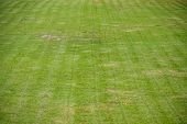 picture of grass-cutter  - green soccer field was new cut grass - JPG