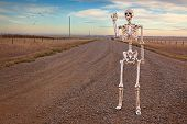 stock photo of walking dead  - A friendly skeleton walking along a lone country road - JPG