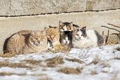 foto of huddle  - A group of feral cats huddled together to keep warm near the wall of an old abandoned home. Taken during -28C weather.