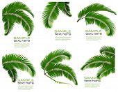 foto of coco  - Set green branches with leaves of palm trees - JPG