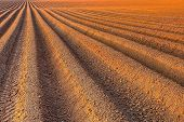 stock photo of plowed field  - Agricultural background of newly plowed field ready for new crops - JPG